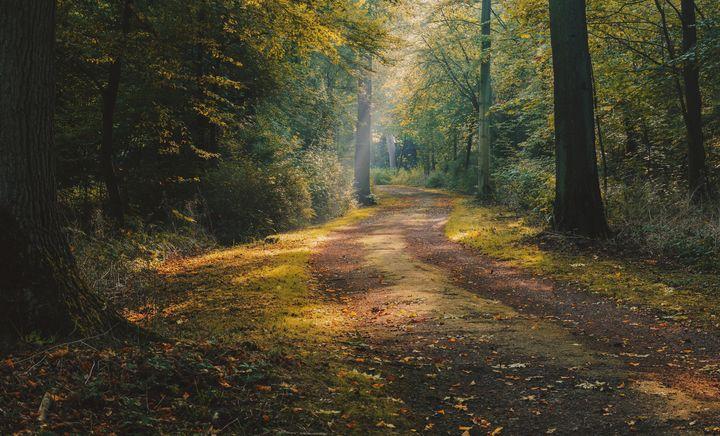 Autumn Path - Aleksander Solarski