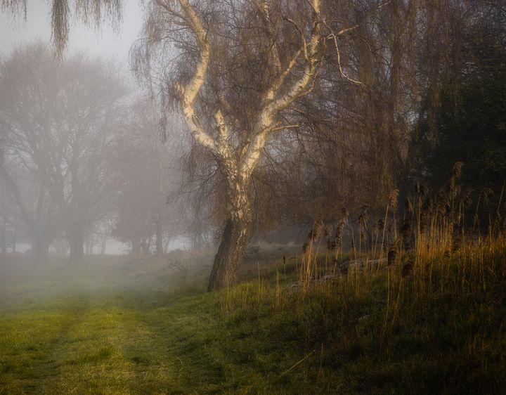 Tree of Golden Light - Alex Sol