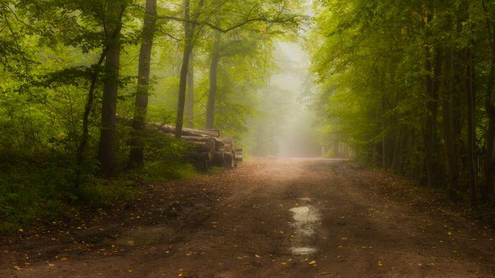 The Glowing Path - Aleksander Solarski