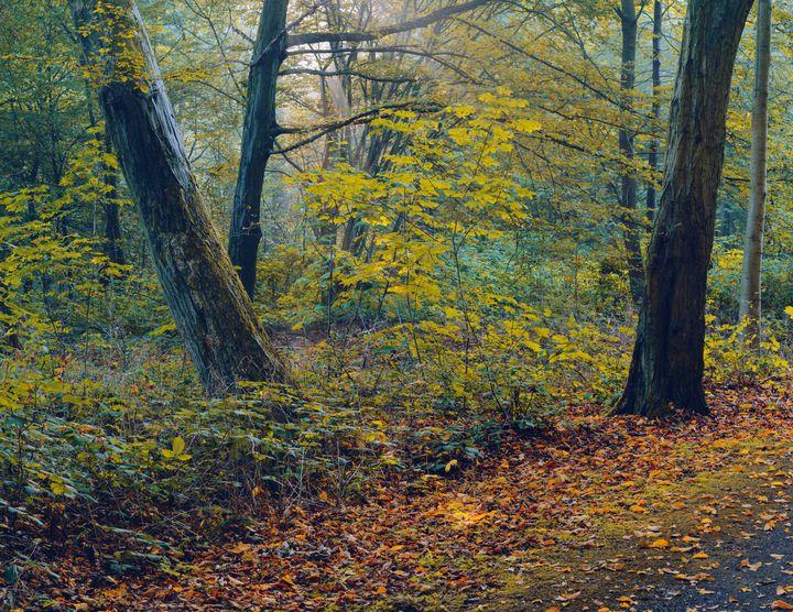 The Dance of Autumn Trees - Alex Sol