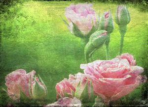 The English Garden of Pink Roses