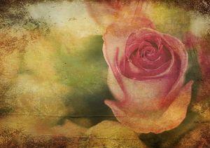 Vintage English Rose Bud
