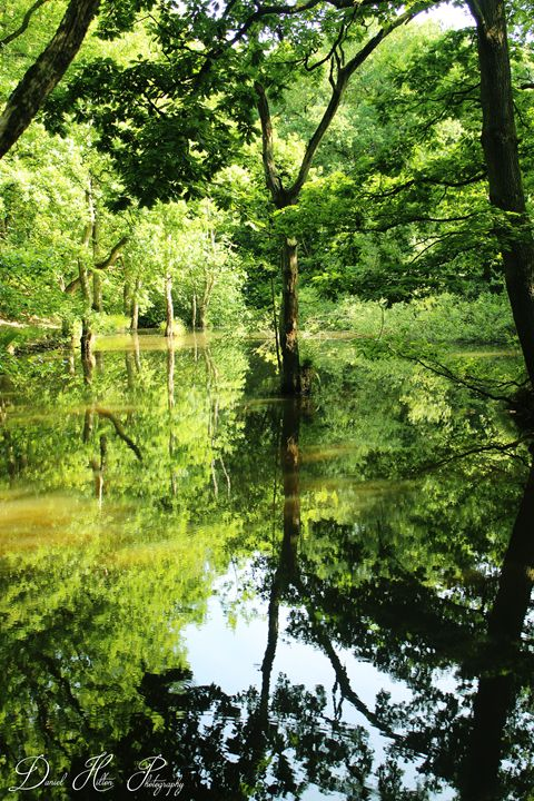 The Forest Lake - Daniel Hilton