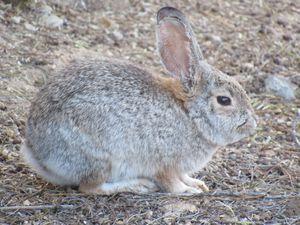 Bunny - Photos by Jenn