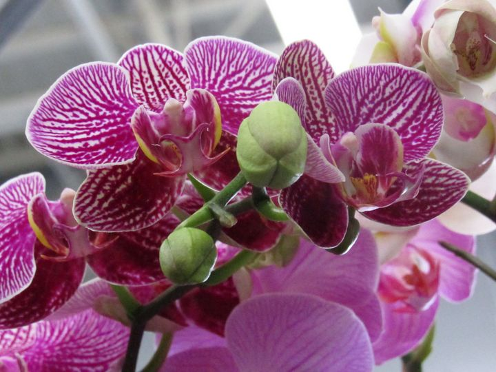 Wild Blooms - Photos by Jenn