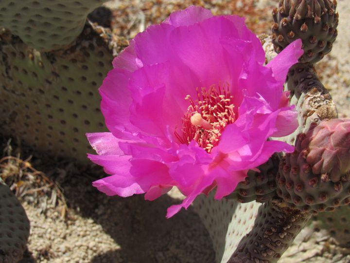 Cactus Bloom - Photos by Jenn