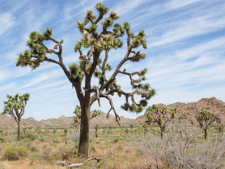 Desert forest - Photos by Jenn