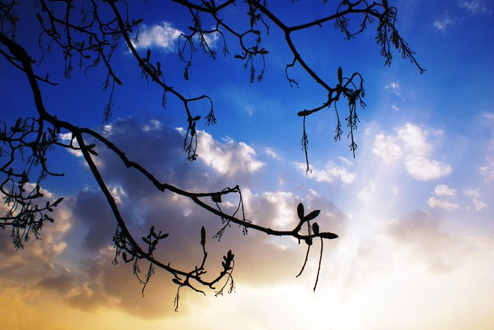 Darkness Awaits Light To Flourish - Selene