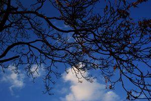 Incandescent Tree