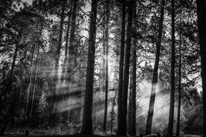 Smoke in the Trees - Si Glogiewicz Photography