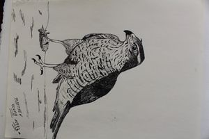 Hawk - MR.Y