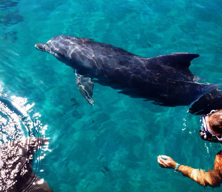 Snorkeling with dolphins - Luzi