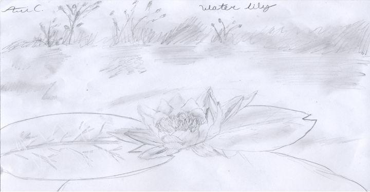 waterlily - Cerasuolo Art