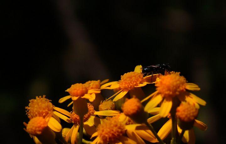 Buzz 1 - Prajna Photography