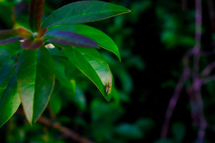 Mosquito in the Green - Prajna Photography