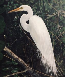 White Heron in Mangoves