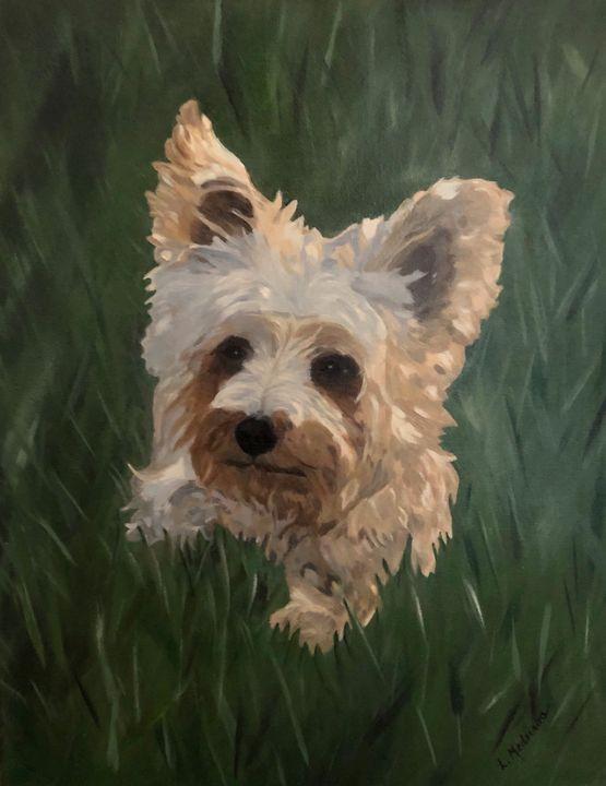 Dog in grass - Medeiros Art Gallery