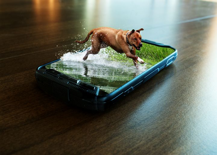Dog in phone - Photography