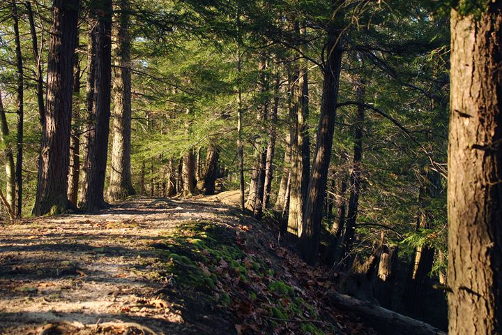 On The Ridge - Photography