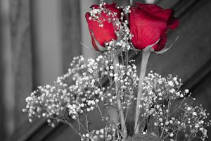 Red of Rose
