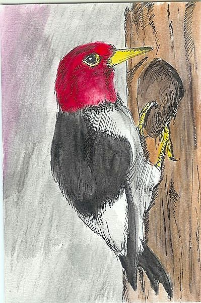 #3 Woodpecker Greeting Card - Ryan Brock Campbell