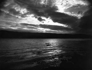Swans Loch Melfort Argyll Scotland