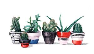 cacti and succulents in pots