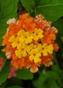 Flowery Buds