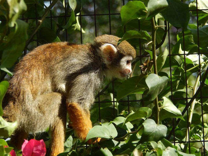 A Monkey Baby Monkey - Daniel's Work