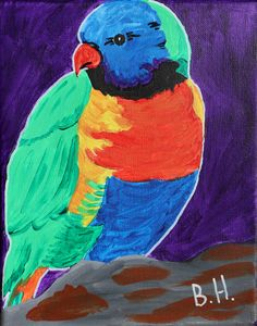 Splendid Parakeet - A Splash of Color