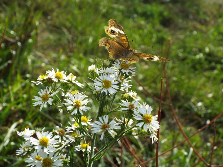 butterfly - L.M.