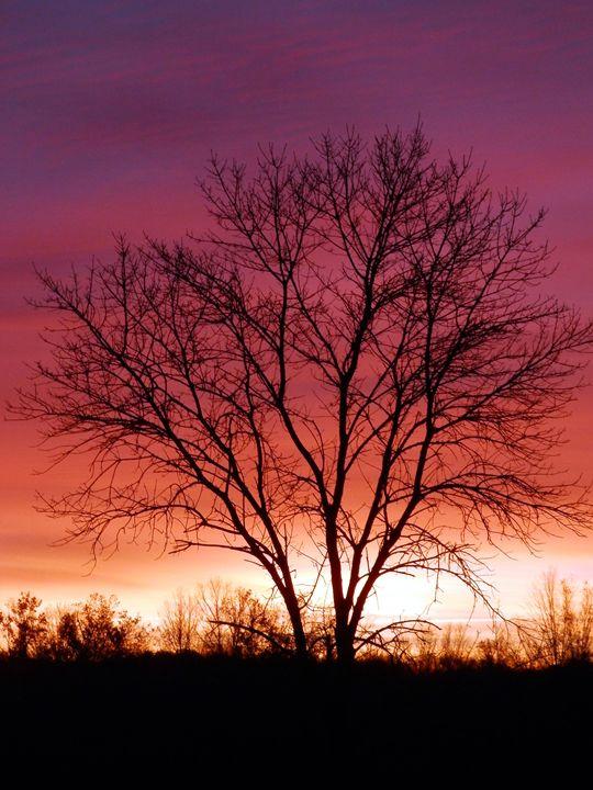 Dawning - bancroft
