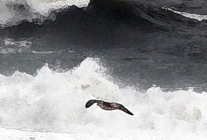 Racing the waves - bancroft