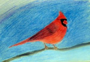 Cardinal Drawing - Rachel's Photos & Drawings
