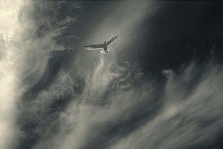God is a Seagull - Marko Stojanovic