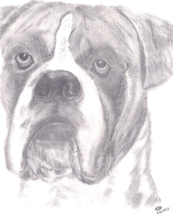 The Boxer Easy Draw Drawings Illustration Animals Birds