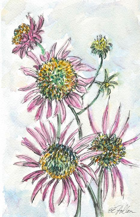 Pink Daisies - Erin Hollon Fine Art and Illustration