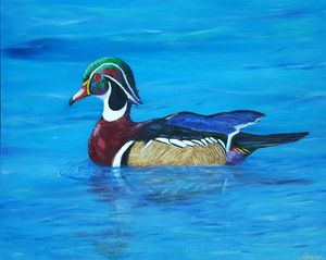 The Regal Wood Duck