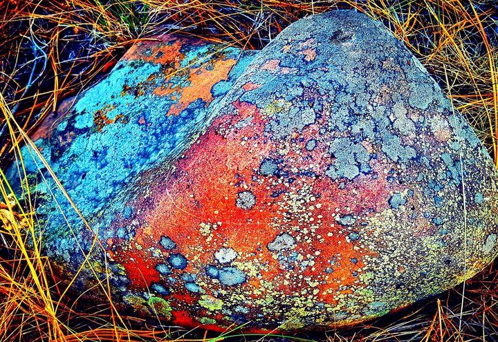 Rocky Mountain Coral - J.A.Logan Art