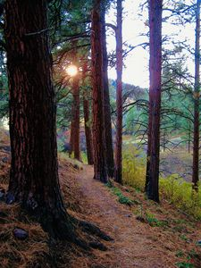 Blue Mountain Trail, Missoula