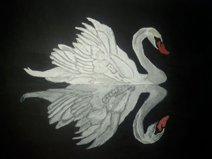 Beautiful swan - Priyas gallery