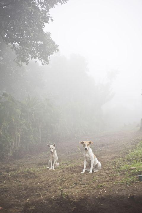 Two Dogs - hiroko tanaka