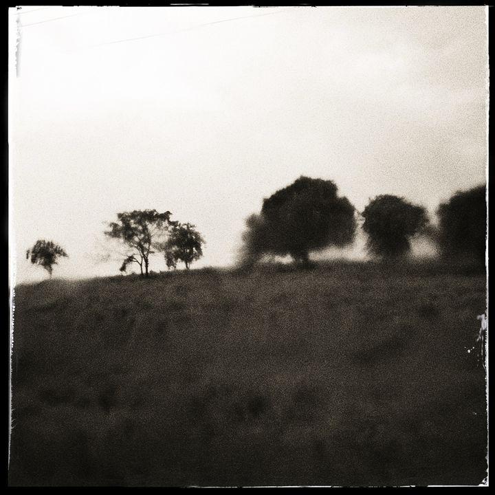 trees on mexican road - hiroko tanaka