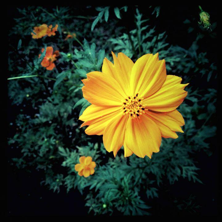 little flower - hiroko tanaka