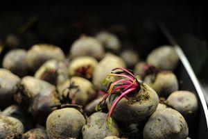 Fresh Beets - hiroko tanaka