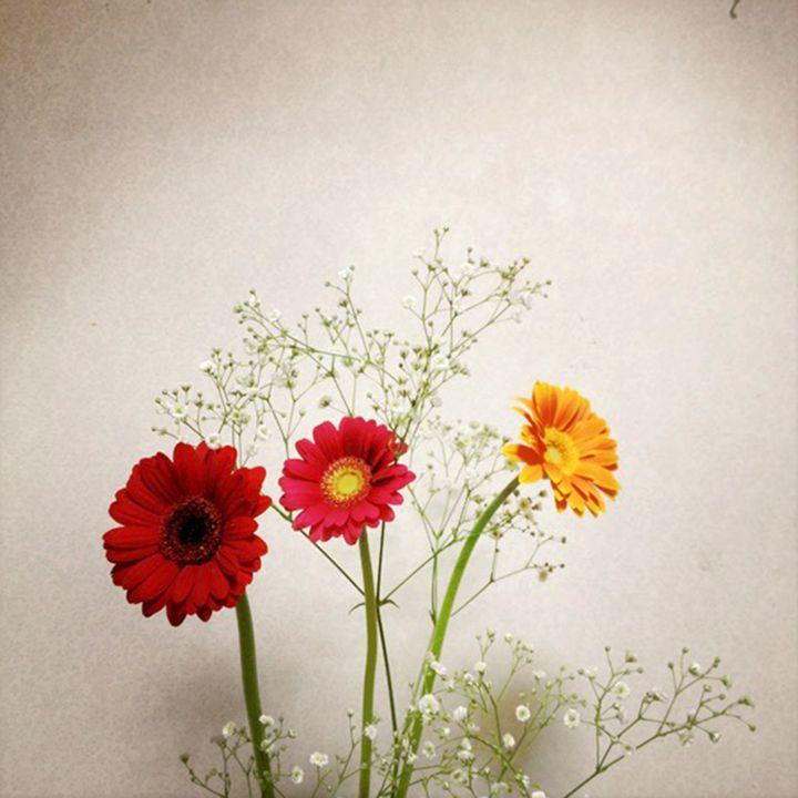Flores - hiroko tanaka