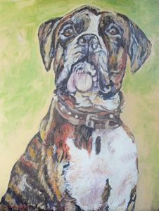 Boxer Dog 'Wanted Dead or Alive'
