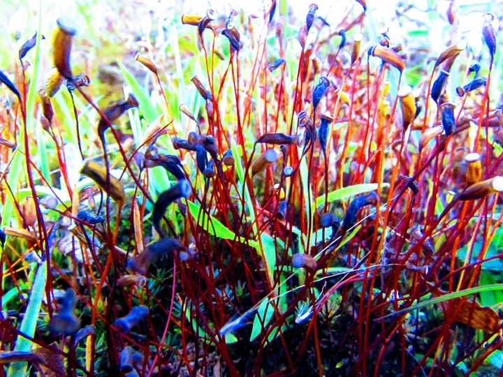 cỏ cây - pham Giang