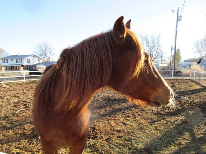 City Horse #3 - My Evil Twin