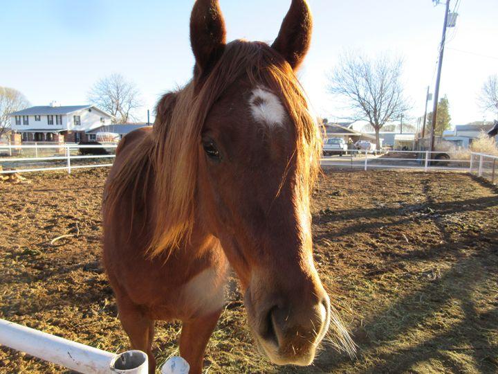 City Horse #2 - My Evil Twin